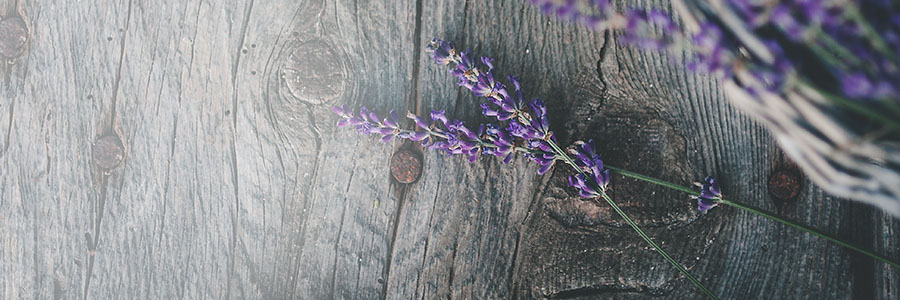 lavender-collection-head-bg